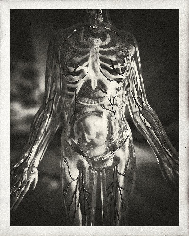 symonchow-anatomy.jpg