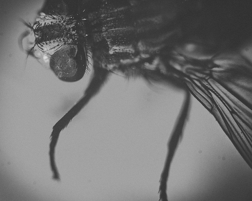 symonchow-fly.jpg