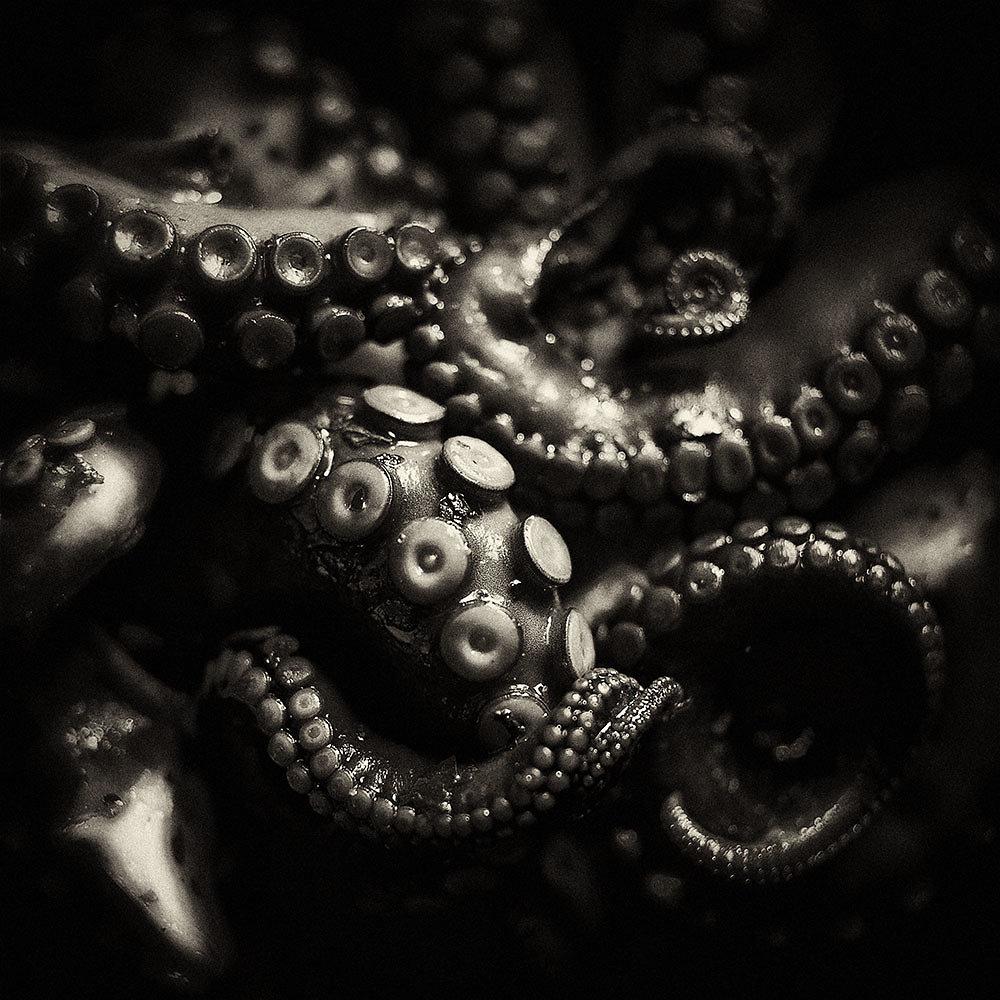 symonchow-tentacles.jpg