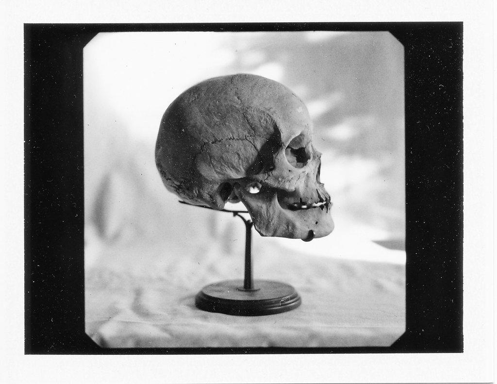 symonchow-skullpol.jpg